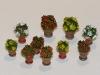 380 - Flowers in flowerpots