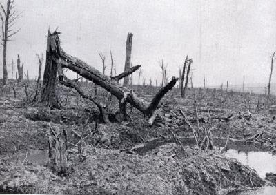 avocourt wood 1916