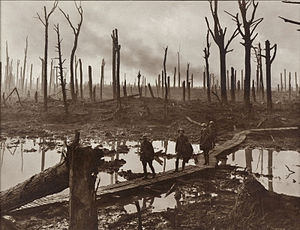 A1 Polygon wood
