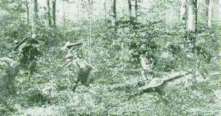 C1 Argonne forest